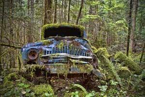 Ne visi keliai miškuose yra pravažiuojami.
