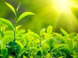 saule-augalai-led
