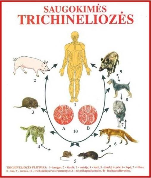 trichinelioze