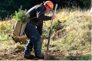Kasmet – ne mažiau kaip po 3000 ha naujų miškų