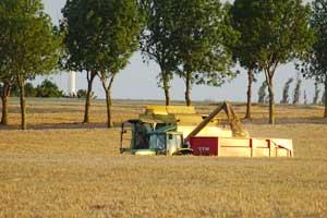 Šiemet prognozuojamas didžiausias derlius