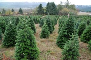 Privatūs miškininkai pasiekė savo: miškuose bus daugiau medžių