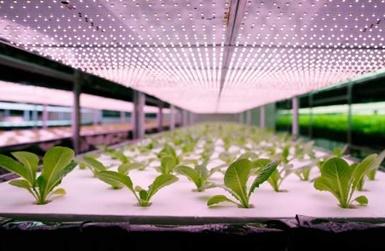 Nuo A iki Z: kaip namuose auginti augalus su augalų lempomis