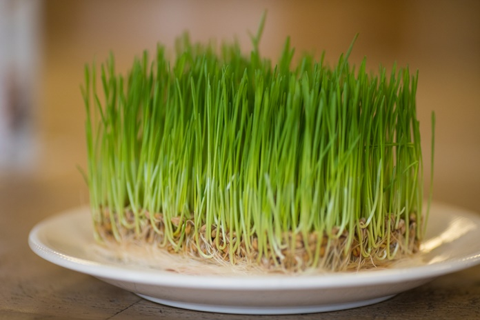 Neišsemiamas sveikatos šaltinis – daigintos sėklos: kuo naudingos ir su kuo valgyti?