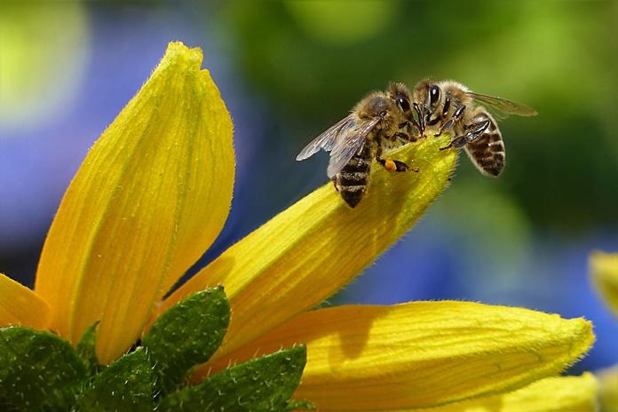 Žiedadulkėms alergiškiems žmonėms besibaigianti vasara dar neatneša sunkumų pabaigos