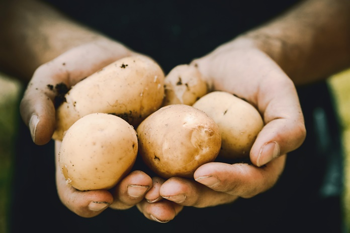 Nuostolingas bulvių biznis virto pelningu ir apmokestinamu verslu