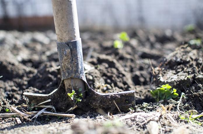 Kokių darbų reikia imtis rudenį sode, darže ir gėlyne