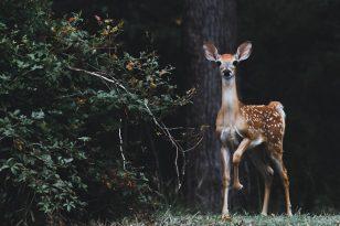 Susidūrimo su laukiniu gyvūnu kaina gali siekti ir keliasdešimt tūkstančių eurų