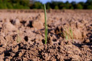 Be aukciono galima pirkti iš valstybės žemės ūkio paskirties žemės plotus